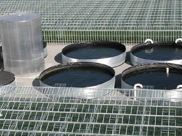 Prins-Greenhouses-Irrigation-04