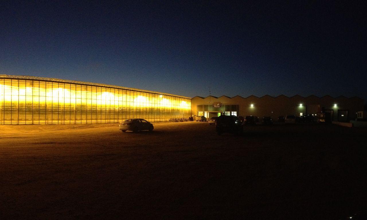 Venlo-Greenhouses-08