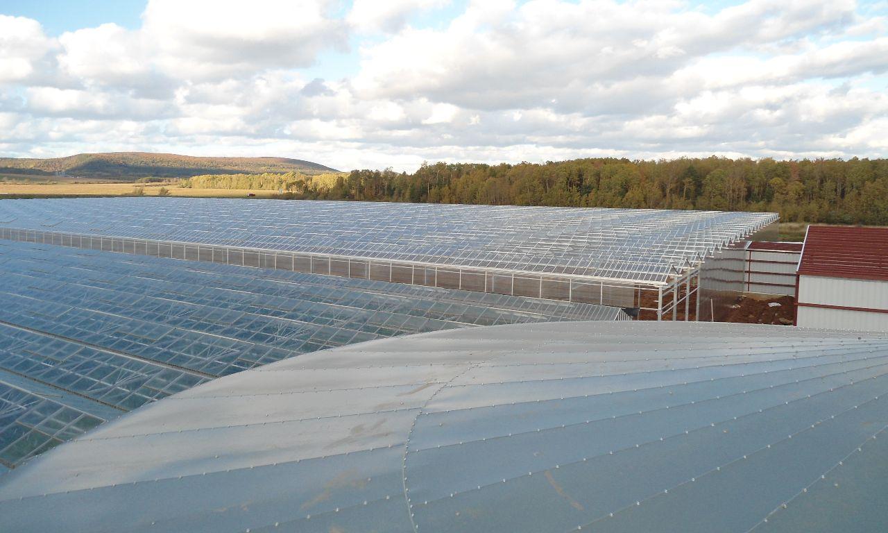 Venlo-Greenhouses-09