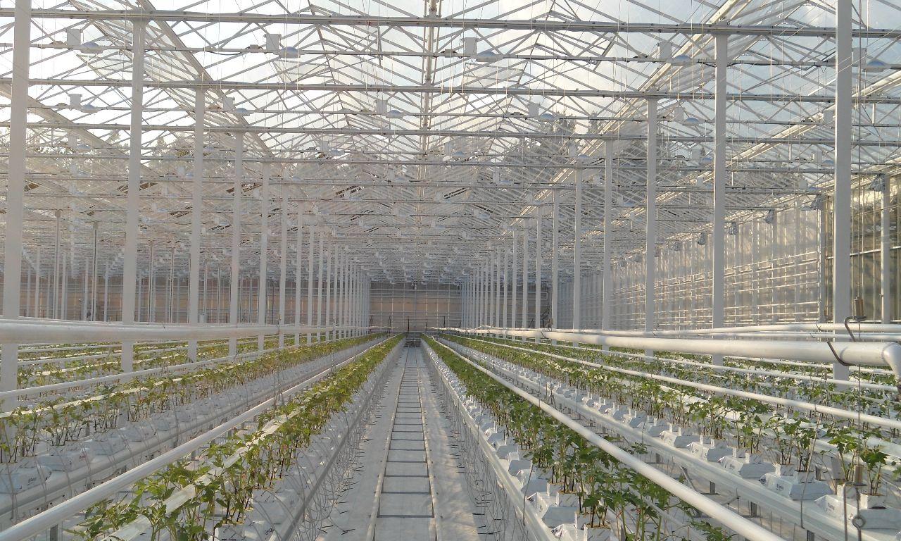 Venlo-Greenhouses-11