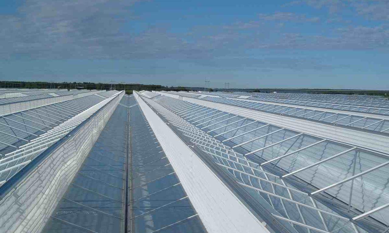 Venlo-Greenhouses-17