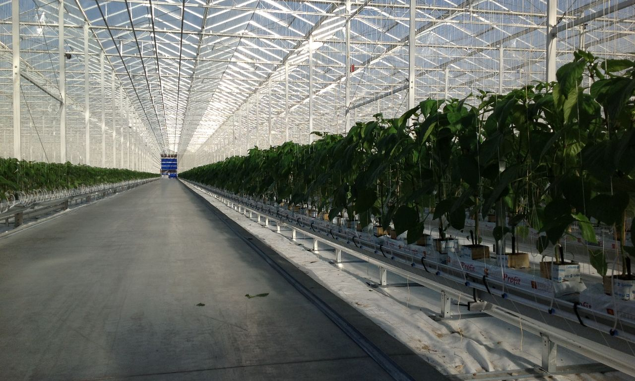 Products Prins Greenhouses