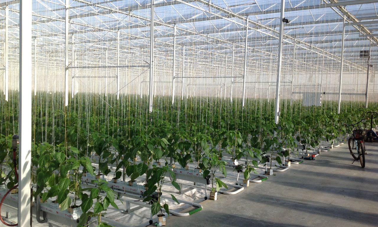 Venlo-Greenhouses-19