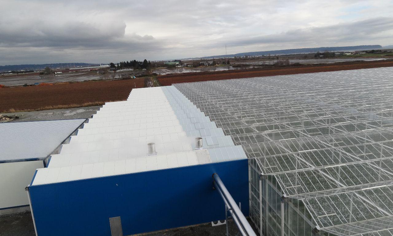 Venlo-Greenhouses-21