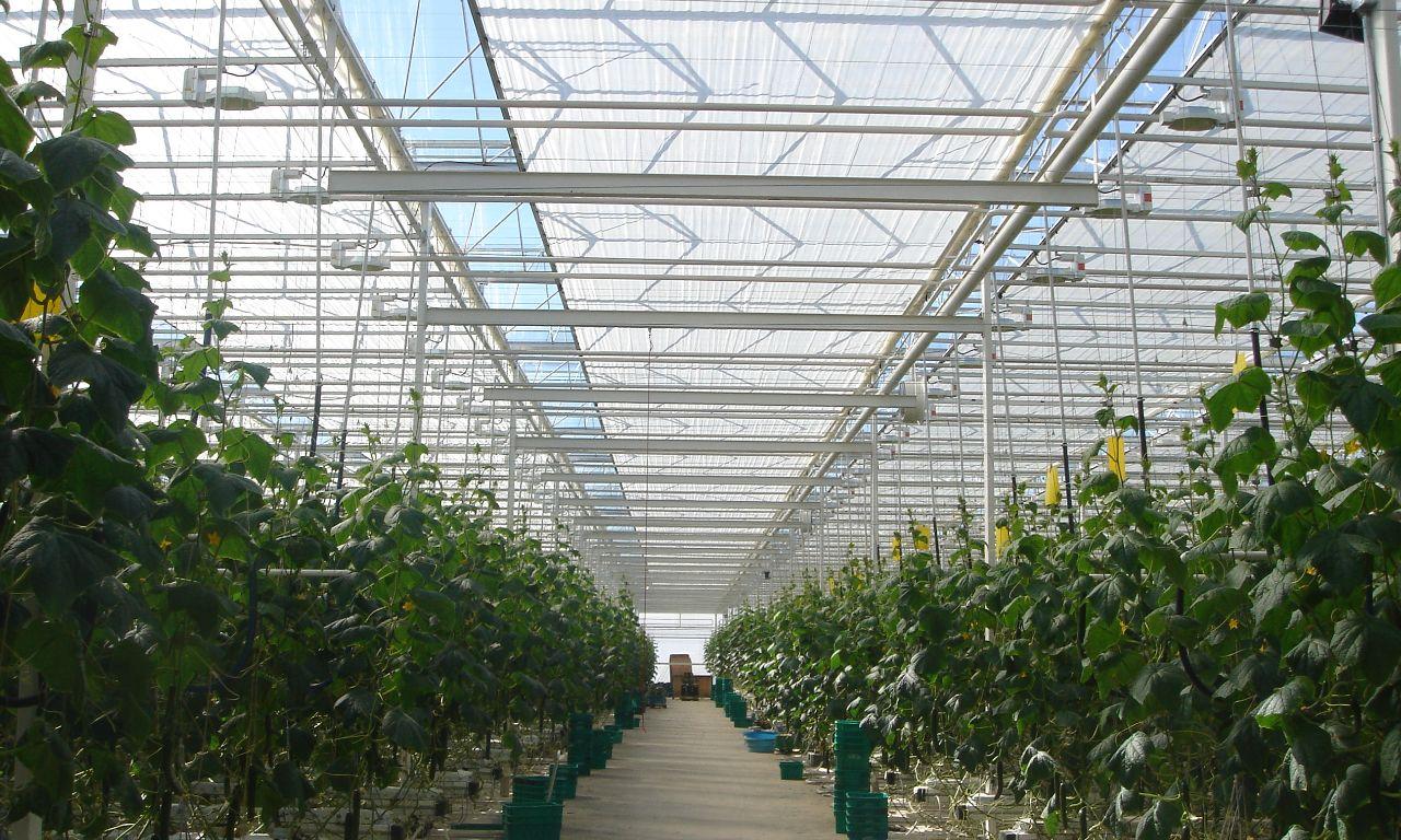 Venlo Greenhouses | Prins Greenhouses