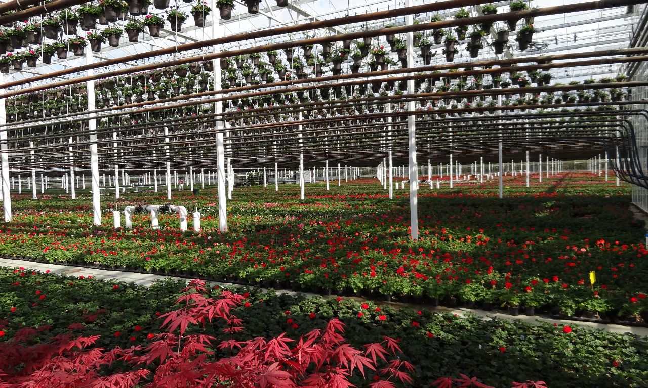 Products | Prins Greenhouses