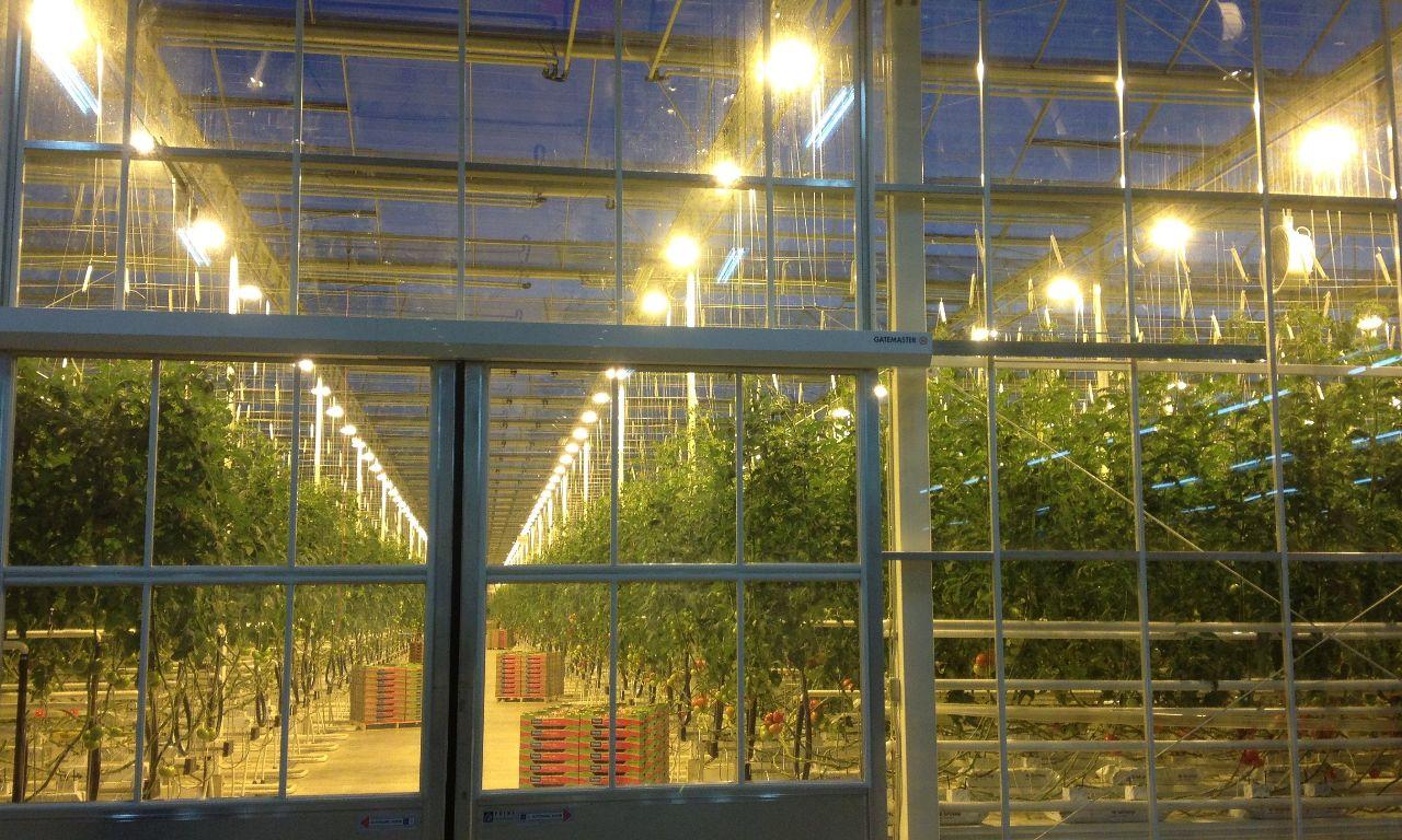Venlo Greenhouses Prins Greenhouses